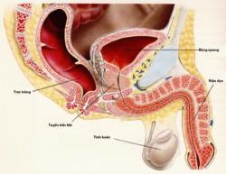 Viêm niệu đạo ở nam giới là bệnh phổ biến do các vi khuẩn lây nhiễm qua đường tình dục không an toàn hoặc đường tiểu gây ra. Khi có những biểu hiện như đi tiểu nhiều lần, ngứa vùng niệu đạo, tiểu dắt, tiểu buốt…