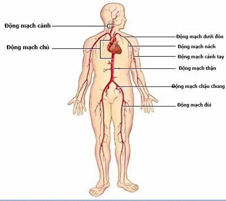 Cách chữa bệnh giang mai ở nam giới