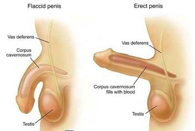 Ảnh hưởng của liệt dương đến nam giới